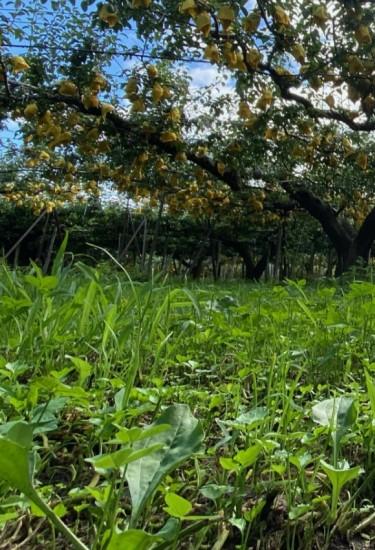 朝露をまとい、目覚める草達